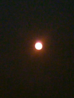 *金星の太陽面通過*